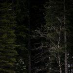 Skilanglauf 2,5km klassisch: Florian Frontino auf der Höhenloipe Scharitzkehl. Foto: SOD/Sarah Rauch